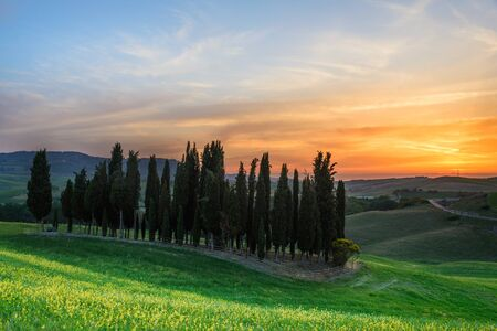 Sunset over a group of cypress trees and yellow flowers near Torrenieri in the Val d Orcia valley in Tuscany, Italy.