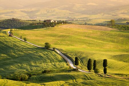 Big cypress trees along the famous white road, or strada bianca, towards Terrapille Val  Orcia Valley, Tuscany, Italy. The movie The Gladiator was recorded here.