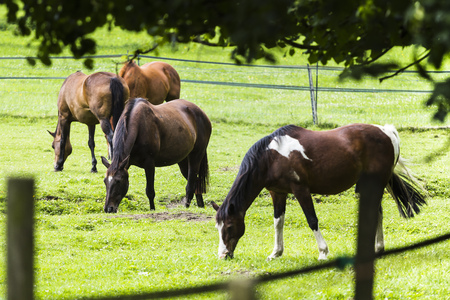 4 horses in a meadow Reklamní fotografie