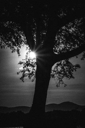 Sun rays through a tree Stock Photo