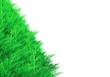 bedeck: Christmas border made from spruce branches over white. Selective focus at the front of the shrub pine green branches. With pine branches background blur. With copy space. Stock Photo