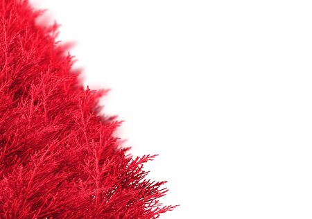 bedeck: Christmas border made from spruce branches over white. Selective focus at the front of the shrub pine red branches. With pine branches background blur. With copy space.