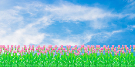 Group of pink siam tulip flower with blue sky with cloud background and with copy space Stock Photo