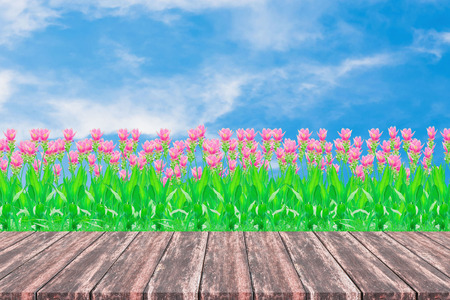 Green field under blue sky. Group of pink siam tulip flower. Wood planks floor and beautiful nature background. Stock Photo