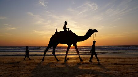 Silhouette of a camel on the sea at sunset. photo