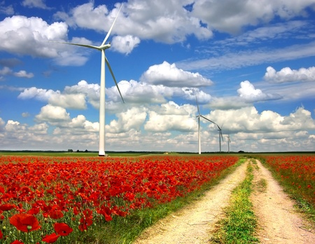 Landscape with wind turbines on poppies plantation  photo