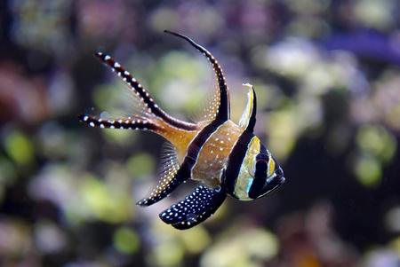 Vida en el oceano Foto de archivo - 13023541