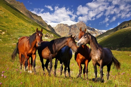 Picturesque mountain landscape Stock Photo - 13023611