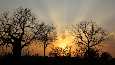 Picturesque nature landscape with Baobab  Mandu, India Stock Photo - 13081399