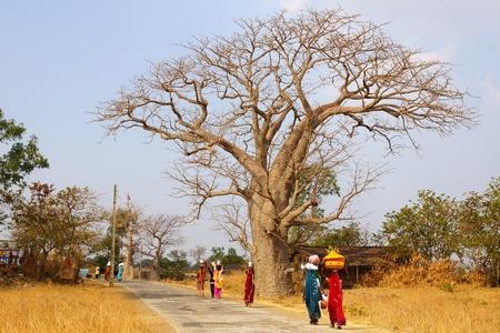 india woman: Picturesque nature landscape with Baobab. Mandu, India