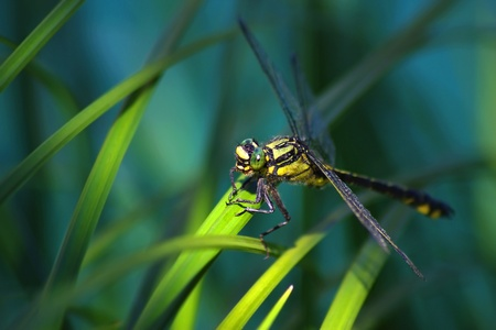 The dragonfly close up photo