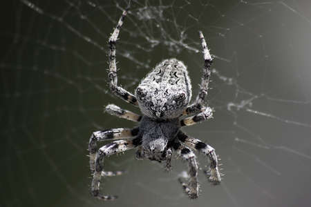 Close up of a spider  photo