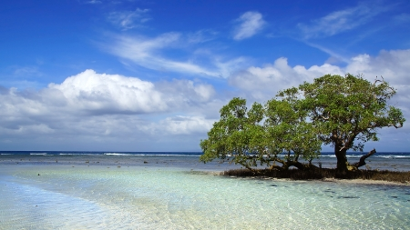 Tropical coast with mangrove tree, Siquijor Island, Philippines photo