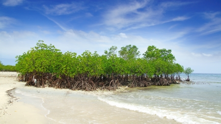 Landscape with mangrove tree.  Siquijor island, Philippines photo