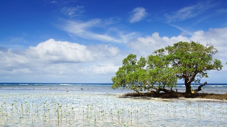 Landscape with mangrove tree   Siquijor island, Philippines photo