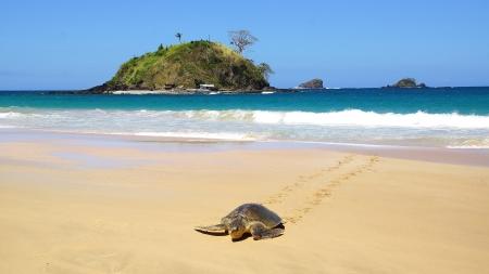 large turtle: Sea turtle on beach. El Nido, Philippines