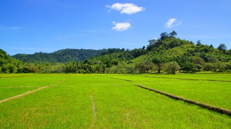 Landscape with rice field. El Nido, Palawan island, Philippines photo