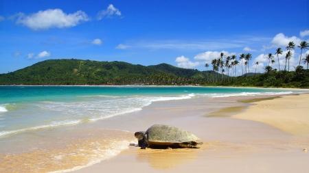 Sea turtle on beach. El Nido, Philippines photo