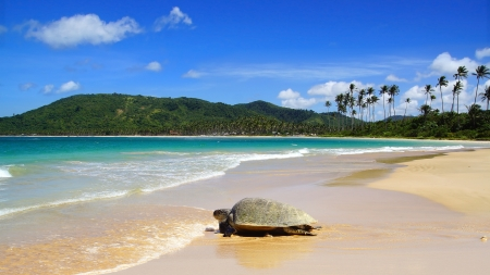philippine: Sea turtle on beach. El Nido, Philippines