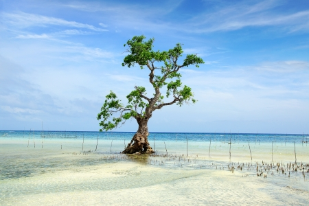 mangrove: Landscape with mangrove tree.  Siquijor island, Philippines