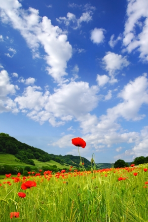 somnolent: Picturesque nature rural landscape with poppies plantation. Stock Photo
