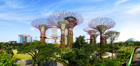 SINGAPORE - FEBRUARY 04, 2014  The Supertree Grove at Gardens by the Bay  These unique Supertrees are tall – up to 16 storeys in height, created by UK landscape architects Grant Associates  Supertrees vertical gardens collect rainwater