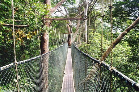 Canopy walk in Taman Negara National Park, Malaysia  photo