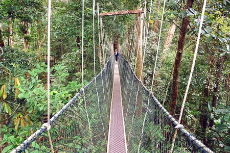 Canopy walk in the rainforest  Taman Negara, Malaysia photo