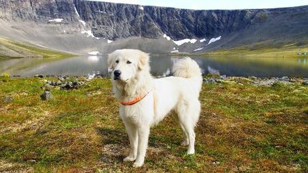 pastorcillo: Verano paisaje de montaña con el perro pastor de Anatolia.