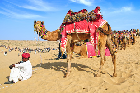 camels: Camel with rider on the dunes. Festival in Bikaner, India