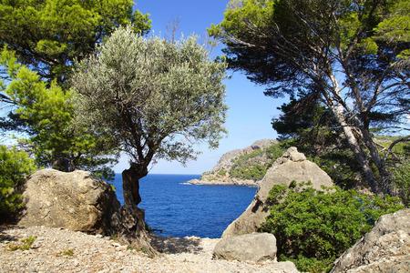 Schilderachtig overzees landschap met baai. Mallorca in Spanje