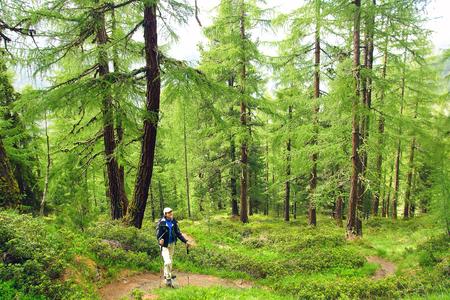 Paysage avec femme avec sac à dos dans une forêt de mélèzes.