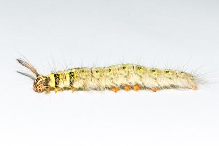 Macro of caterpillar