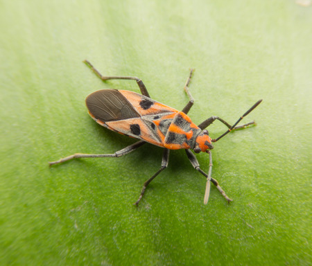Bugs and Insects, Macro shot Stock Photo