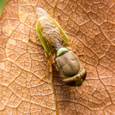 cause: Flies cause diseases Stock Photo