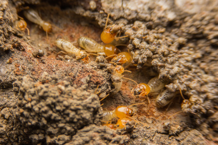 nuisance: Termites nesting Stock Photo