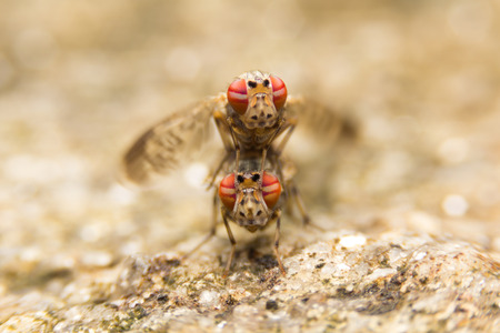 coitus: Insects mating On stone