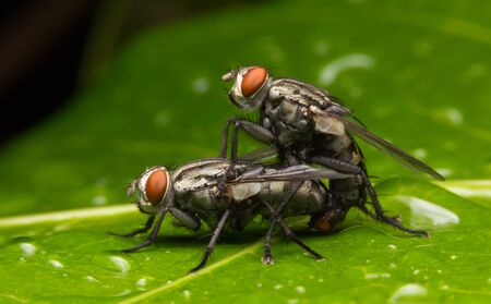 nude outdoors: The breeding of flies.
