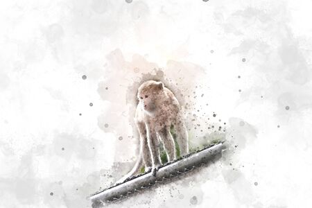 esophagus: Abstract Monkey on watercolor background, Watercolor painting, Monkey Stock Photo