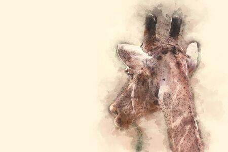 esophagus: giraffe on watercolor background.