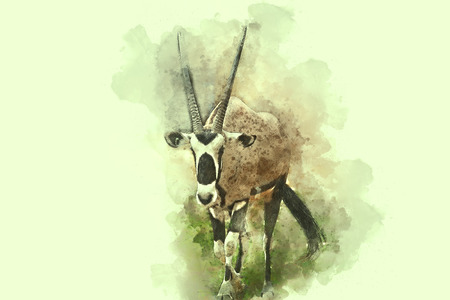 esophagus: Gemsbok, African deer watercolor painting, digital illustration