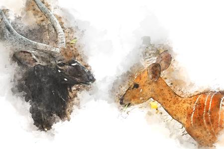 Gemsbok, African deer watercolor painting,