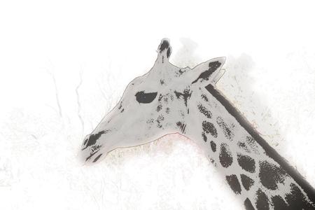 primate biology: giraffe on watercolor background.