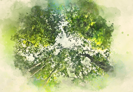 Abstract green tree in the forest on watercolor illustration painting background.