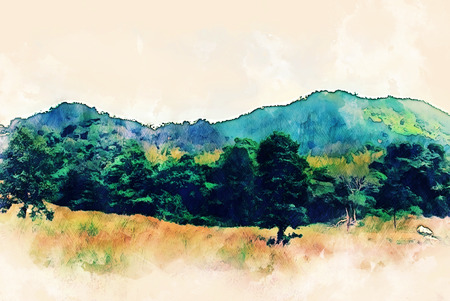 Abstract color mountain peak and tree watercolor illustration painting background.