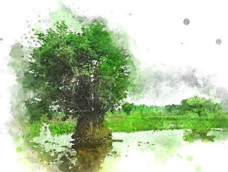 Abstract colorful beautiful green field landscape and tree in morning at Thailand on watercolor illustration painting background. Stok Fotoğraf - 126951347
