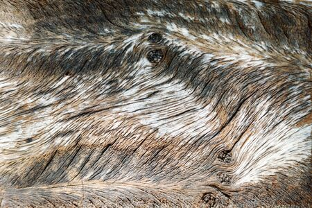 Close up wood texture background and show detail texture line.