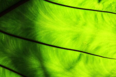 Close up green color leaf texture background. Stockfoto