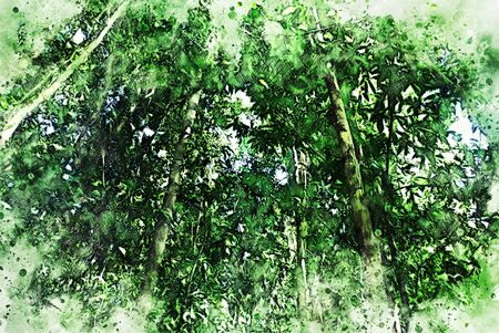 Abstract colorful green shape branch tree in the forest on watercolor illustration painting background. Фото со стока