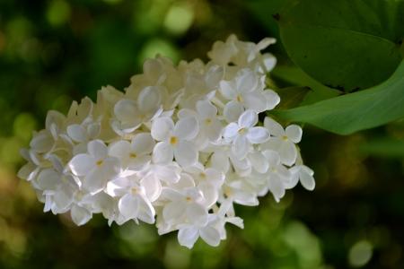 Weiß Fuchsia Blume In Nahaufnahme Lizenzfreie Fotos, Bilder Und ...